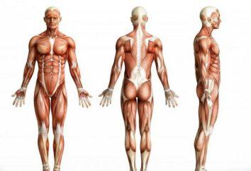 Splenio capitis muscolare: sintomi, il trattamento e la prevenzione delle malattie