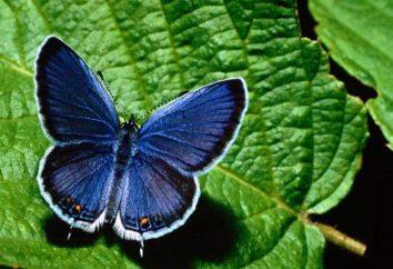 Rätsel über Insekten: groß und klein, schön und erschreckend