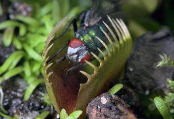 Quoi et comment manger les plantes? insectes phytophages