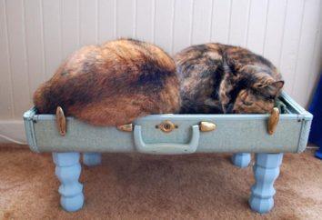 Łóżka dla kotów z własnymi rękami