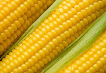 Les meilleures variétés de maïs: photo, description
