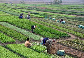 """Specjalność """"Technologia produkcji i przetwórstwa rolnego"""": gdzie studiować, komu pracować"""