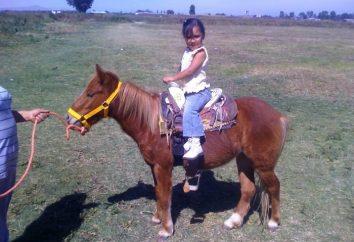 Poney – petit cheval