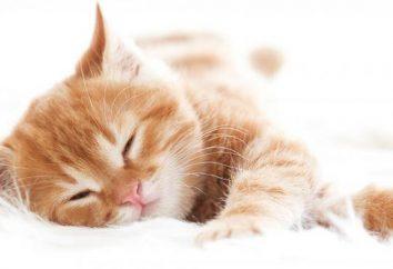 Olor gatito: perfumistas han creado un perfume con olor a pelo de gato