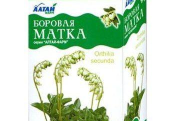 Roślina o nazwie wyżynny macicy. Wskazania do stosowania i cel