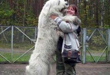 """Karma dla psów """"Proplan"""": skład, opinie właścicieli zwierząt domowych i lekarzy weterynarii"""