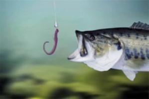 Geheimnisse des Fischens: Köder Fisch