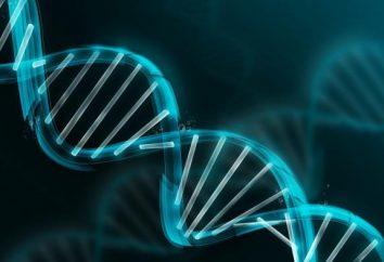 Welche Funktionen in einer Zelle Nukleinsäure durchführen? Die Struktur und Funktion von Nukleinsäuren