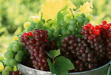 uve Moscato: la descrizione della varietà e le foto