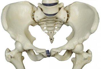 Samice miednica anatomia, struktura. MRI narządów miednicy u kobiet