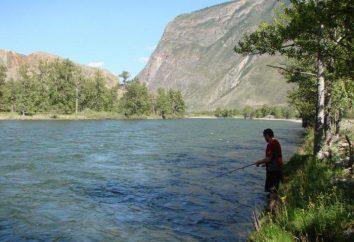 Loisirs et pêche dans les montagnes de l'Altaï. Caractéristiques de la pêche dans les lacs et les rivières d'Altaï