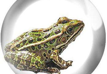 étape du cycle de vie et développement des grenouilles
