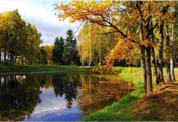 bellos lugares cerca para descansar, una sesión de fotos o un paseo