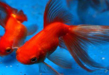 Ile żywo rybki w akwarium?