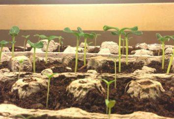 ¿Qué condiciones son necesarias para la germinación de las semillas? Temperatura para la germinación de semillas