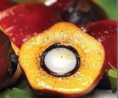 Olej palmowy: zaszkodzić lub korzyści? Zastosowanie w żywności