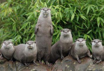 Interesante ver: Zoológico de Londres