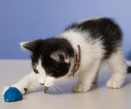 Zabawki dla kotów z własnymi rękami: dać radość ich puszyste grudek