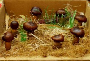 Was kann in der Heimat aus Kastanien werden?