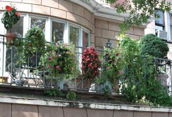 projekt balkon: ciekawe pomysły i praktyczne wskazówki