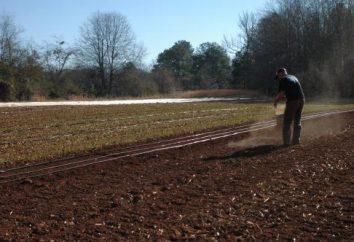 Engrais lors de la plantation des pommes de terre. la culture de la pomme de terre. Le meilleur engrais lors de la plantation