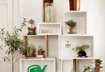 Estantes para las flores – algo necesario en cada apartamento