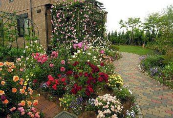 Pflege und Bepflanzung Rosen. Empfehlungen Gärtner