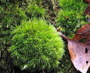 Ejemplos de aromorphosis en plantas y animales