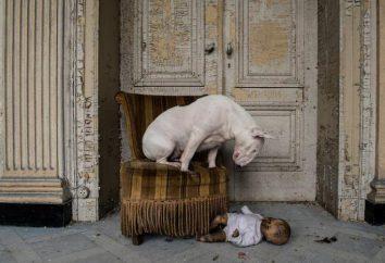 Como fotógrafo y Claire Bull Terrier explorar lugares abandonados en toda Europa