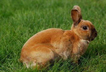 Co trzeba siatkę dla komórek królika: wielkość. Jak zrobić Hutch królik z siatki z własnymi rękami?