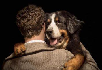 Czas trwania życia psów. Średnia długość życia ras psów