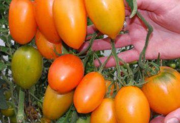 """Grade """"bananas vermelho"""" (tomate): opiniões e as características"""