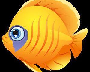 Hai sognato di un pesce? Guardiamo nel libro dei sogni!