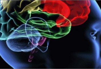 wyższą aktywnością układu nerwowego. odruchy