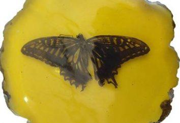 Mudança de forma: à medida que a lagarta se transforma em borboletas