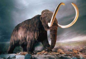Mammoth Hauer. Ihr Wert und Produktion