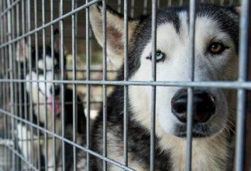Aviary para Huskies com as mãos: desenhos, fotos, e tamanho. É possível manter os Huskies em uma gaiola? Como ensinar os Huskies para a gaiola?