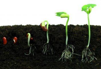 Las principales condiciones de germinación de las semillas
