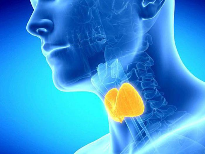 productos útiles para la glándula tiroides. Lista de productos que ...