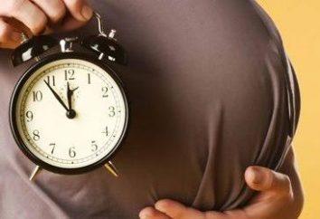 25 settimane di gravidanza: come è il frutto? Cosa accade al 25 ° settimana di gravidanza