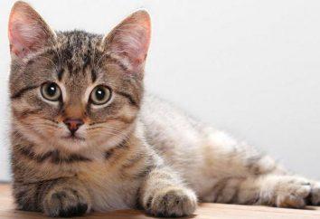 Najbardziej popularne i niezwykłe pseudonimy dla psów i kotów