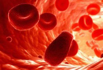 Żywotność czerwonych ciałek krwi u ludzi i zwierząt