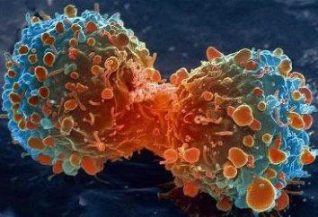 types de cancer, et des méthodes pour leur traitement. Le type de cancer le plus dangereux