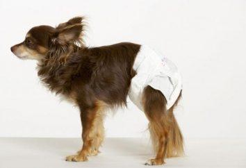 Pour les chiens – Couches pas un luxe