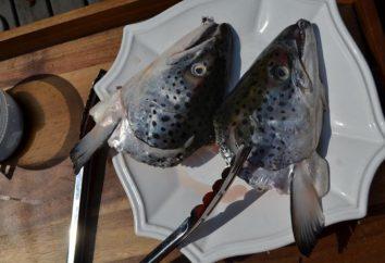 Smaczne naczynie – ucho od głowy i ogona łososia