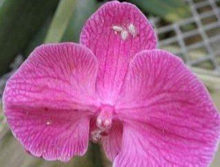Parasites Orchid: sauver leur beauté exotique