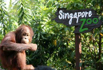 Singapore Zoo: recensioni, indirizzo, foto