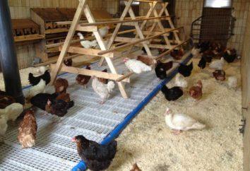 Ein Hühnerstall für 20 Hühner mit ihren Händen. Wie ein Hühnerstall warm bauen