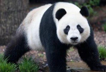 Demeurer si les forêts de bambou où vivent les pandas?