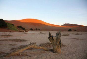 Czym jest pustynnienie? Przyczyny pustynnienia. Gdzie pustynnienie się dzieje?